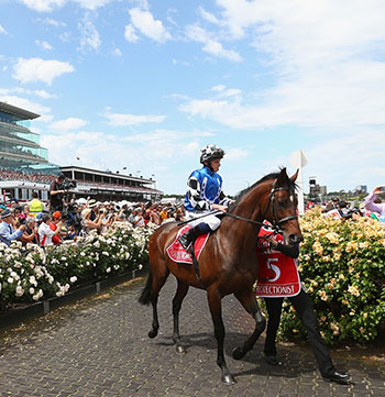 horse passing crowd at melbourne cup